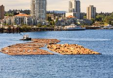 Floating Logs In Nanaimo Stock Photography