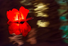 Floating Lotus Flower Paper Lanterns On Water Royalty Free Stock Images