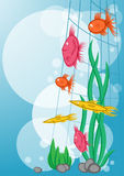 Floating marine fishes. Background with floating marine fishes Stock Photography