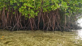 Floating near mangroves shore. Floating near green mangroves and sand shore stock footage