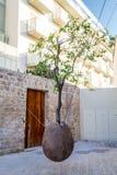 Floating orange tree, Jaffa Royalty Free Stock Photography