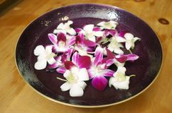 Floating Orchids. White and magenta orchids floating in a dish Stock Images