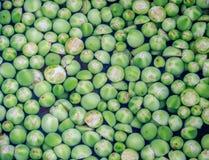 Floating pea eggplants Stock Photography