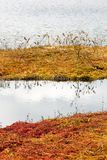 Floating peat shores formed by sphagnum moss Royalty Free Stock Photo