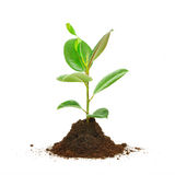 Floating piece of dirt with a growing plant on the Stock Photo