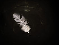 Floating Pigeon Feather on Water Royalty Free Stock Photo