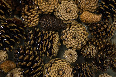Floating Pine Cones Royalty Free Stock Photos