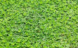Floating plant background Stock Photos