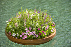 Floating planter of flowers Stock Photography