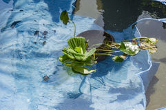 Floating plants Stock Images
