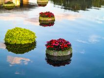 Floating Plants stock image
