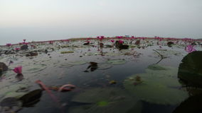 Floating at Red Lotus Lake. Shot with GoPro 4 Silver stock video footage