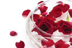 Free Floating Red Rose Royalty Free Stock Photo - 19309175