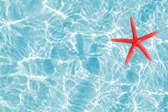 Floating red starfish in turquoise sand beach Royalty Free Stock Photos