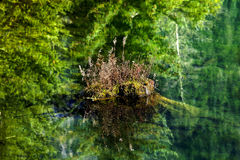 Floating Rock Green Tree Reflectioin Abstract Royalty Free Stock Photography