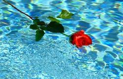 Floating rose royalty free stock image