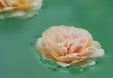 Floating rose royalty free stock photo