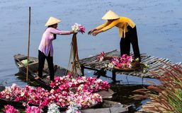 The floating season. Every year, in Dong Thap Muoi, the floating season also known as flood is an opportunity for poor people to earn more income. In the picture Stock Images