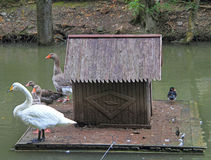Floating small house for birds Royalty Free Stock Photo