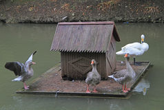 Floating small house for birds Stock Photo