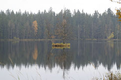 Floating small island on the lake Stock Image