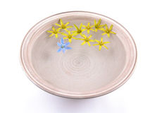 Floating spring flowers Royalty Free Stock Photo