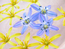 Floating spring flowers Stock Image