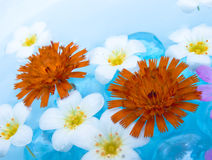 Floating Summer Flowers. Beatiful summer flowers floating on sky-blue water Stock Photo