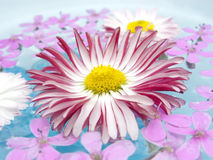 Floating Summer Flowers Stock Photography
