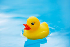 Floating toy duck Stock Image
