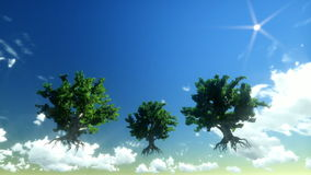 Floating trees and time lapse clouds. Afternoon stock footage