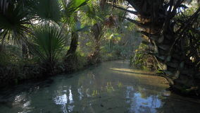Floating on a Tropical River. Floating down a tropical river stock footage