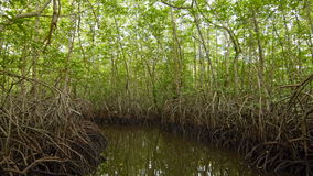 Floating in a tunnel from  mangroves stock video footage