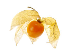 Floating vaporous physalis Stock Photos