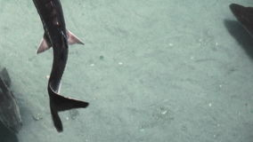 Floating of various fish. stock video footage