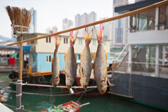 Floating village in the Aberdeen bay in Hong Kong Royalty Free Stock Photo