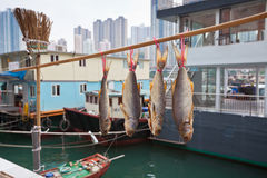 Floating village in the Aberdeen bay in Hong Kong Stock Images