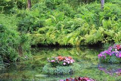 Floating Water garden. Red New Guinea Impatient blooms and petunias in a floating garden Royalty Free Stock Images