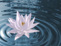 Floating waterlily Stock Photo