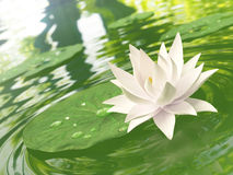 Floating waterlily Royalty Free Stock Photography