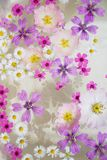 Floating wildflowers Royalty Free Stock Images