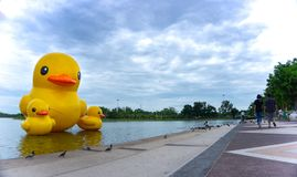 The floating yellow rubber ducks balloon float on the lake. UDONTHANI - THAILAND , JULY 7, 2018 : The floating yellow rubber ducks balloon float on the Nong stock photography