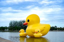 The floating yellow rubber ducks balloon float on the Nong Prachak lake. The floating yellow rubber ducks balloon float on the Nong Prajuk lake at Udonthani Royalty Free Stock Photo