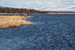 Floatplane and ducks on Alaskan lake Stock Photography