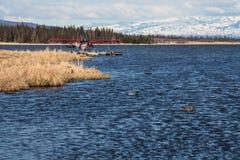 Floatplane and ducks on Alaskan lake Stock Photography