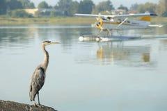 Floatplane und Reiher, YVR, Richmond, BC Lizenzfreies Stockfoto