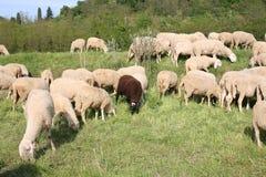 flock Arkivbild