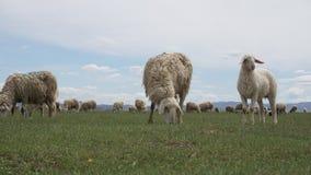 flock Fotografering för Bildbyråer