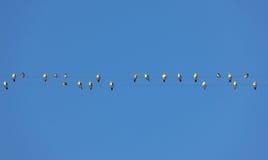 Flock Stock Image