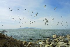 Flock Above Bay Stock Photography